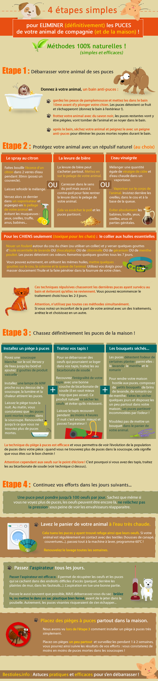 infographie_debarrasser_puces_animal