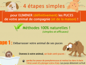 infographie_puces